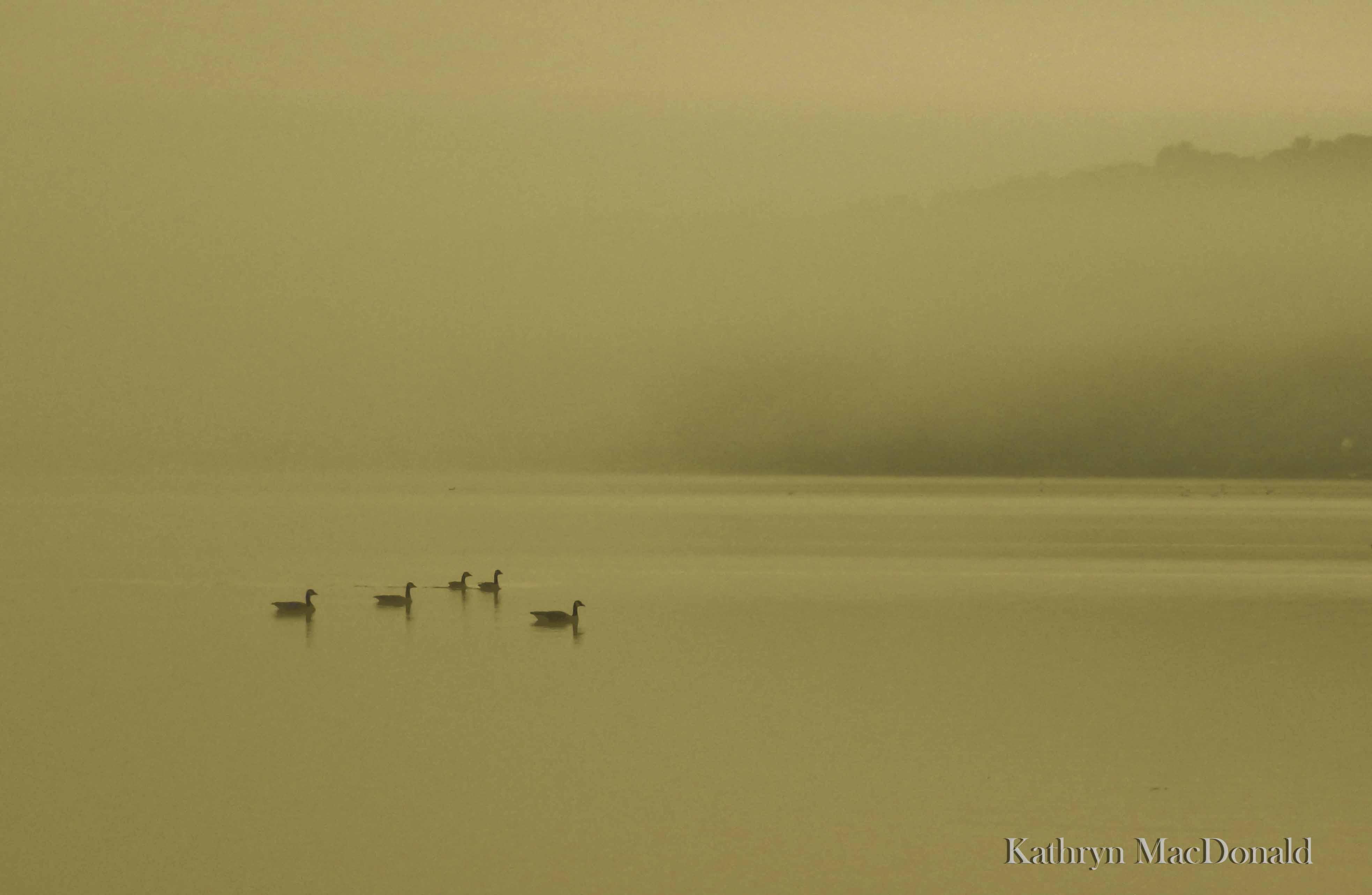 Ducks in mist-PEC-sm (1 of 1)